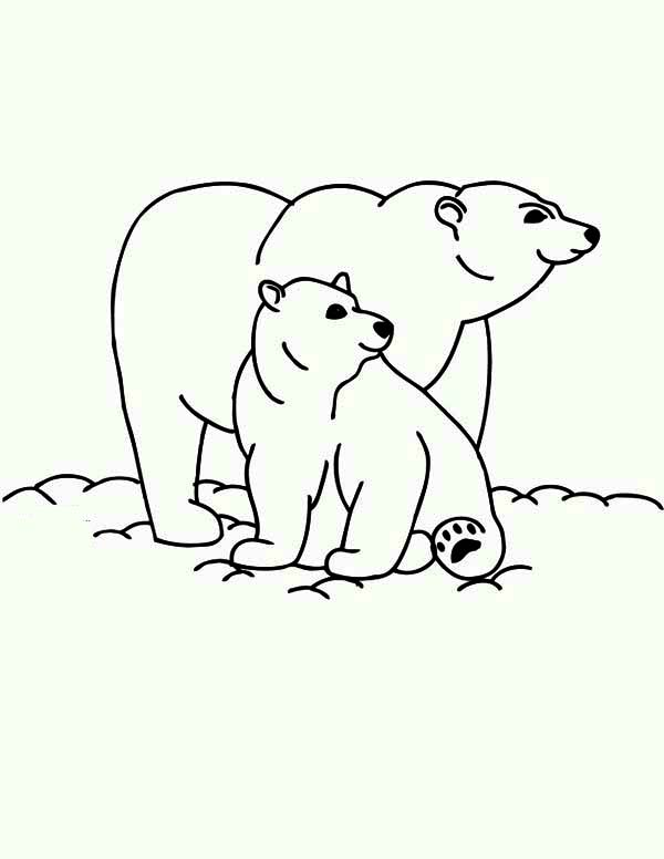 Drawn polar  bear mother bear Coloring Bear Polar and bear