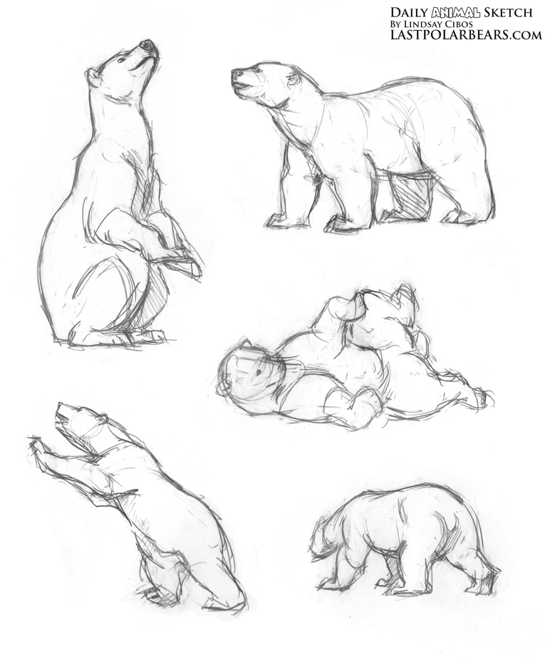 Drawn polar  bear mother bear Drawings the bear Pin Daily_Animal_Sketch_178