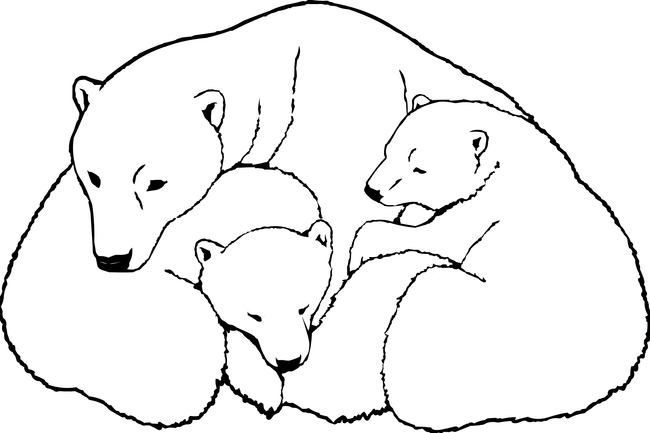 Drawn polar  bear mother bear Drawing cubs bear Bear Mother