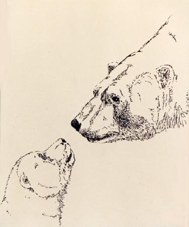Drawn polar  bear native LANDSCAPE ARCTIC  BEAR Drawing