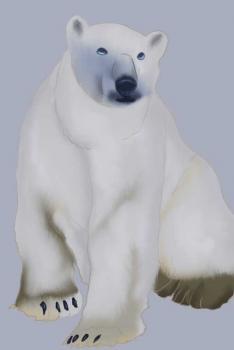 Drawn polar  bear one  Polar : Lessons &