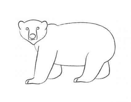 Drawn polar  bear pencil drawing Adding finishing polar and Draw