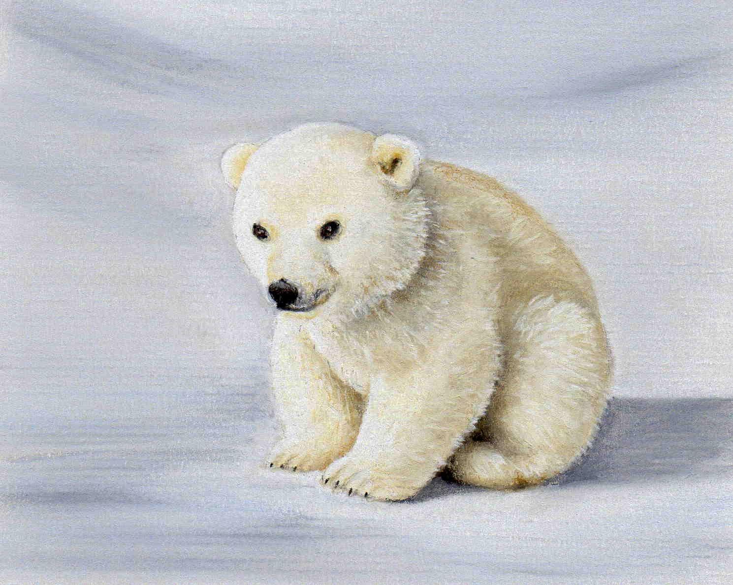 Drawn polar  bear pencil drawing  Drawing Bear Children Coloring