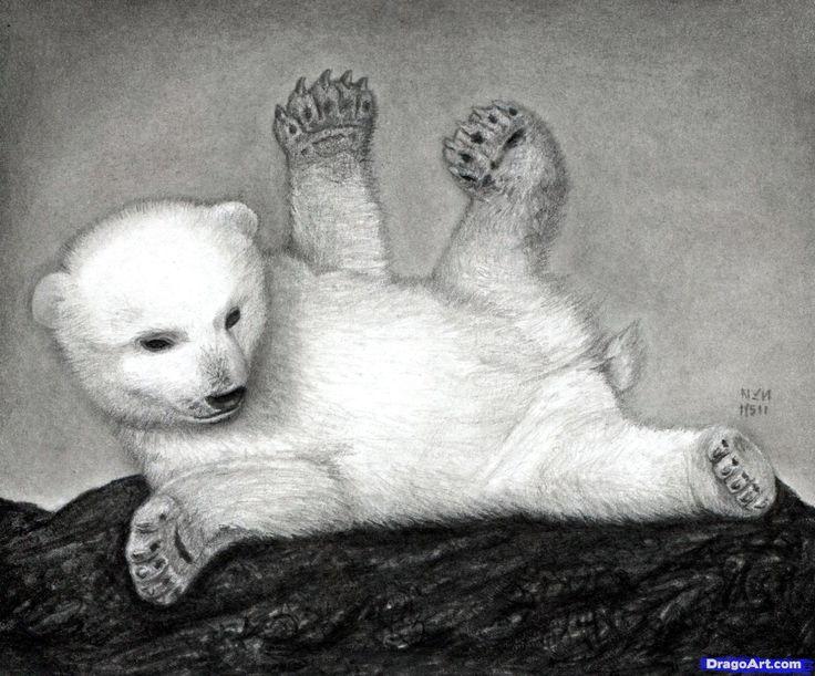 Drawn polar  bear pencil drawing Find and Drawings Pin Pinterest
