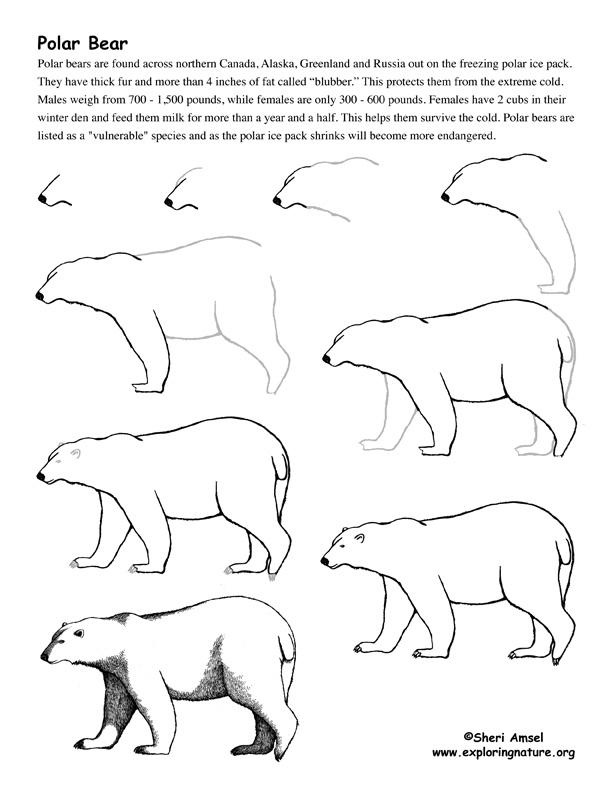 Drawn polar  bear pola Bear Bear  (polar) drawing