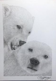 Drawn polar  bear pola Polar Bear Bear DrawingPolar
