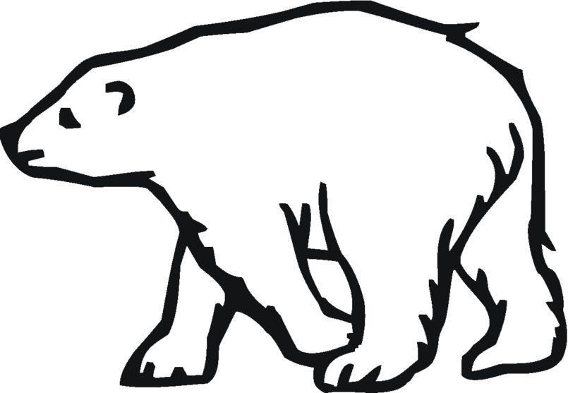 Drawn polar  bear pola Version Realistic Pages Art jpg