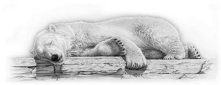Drawn polar  bear pola Pinterest Animal Animal Drawing Bears