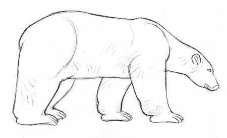 Drawn polar  bear pola 92+ ideas Dessiner la colorfultool