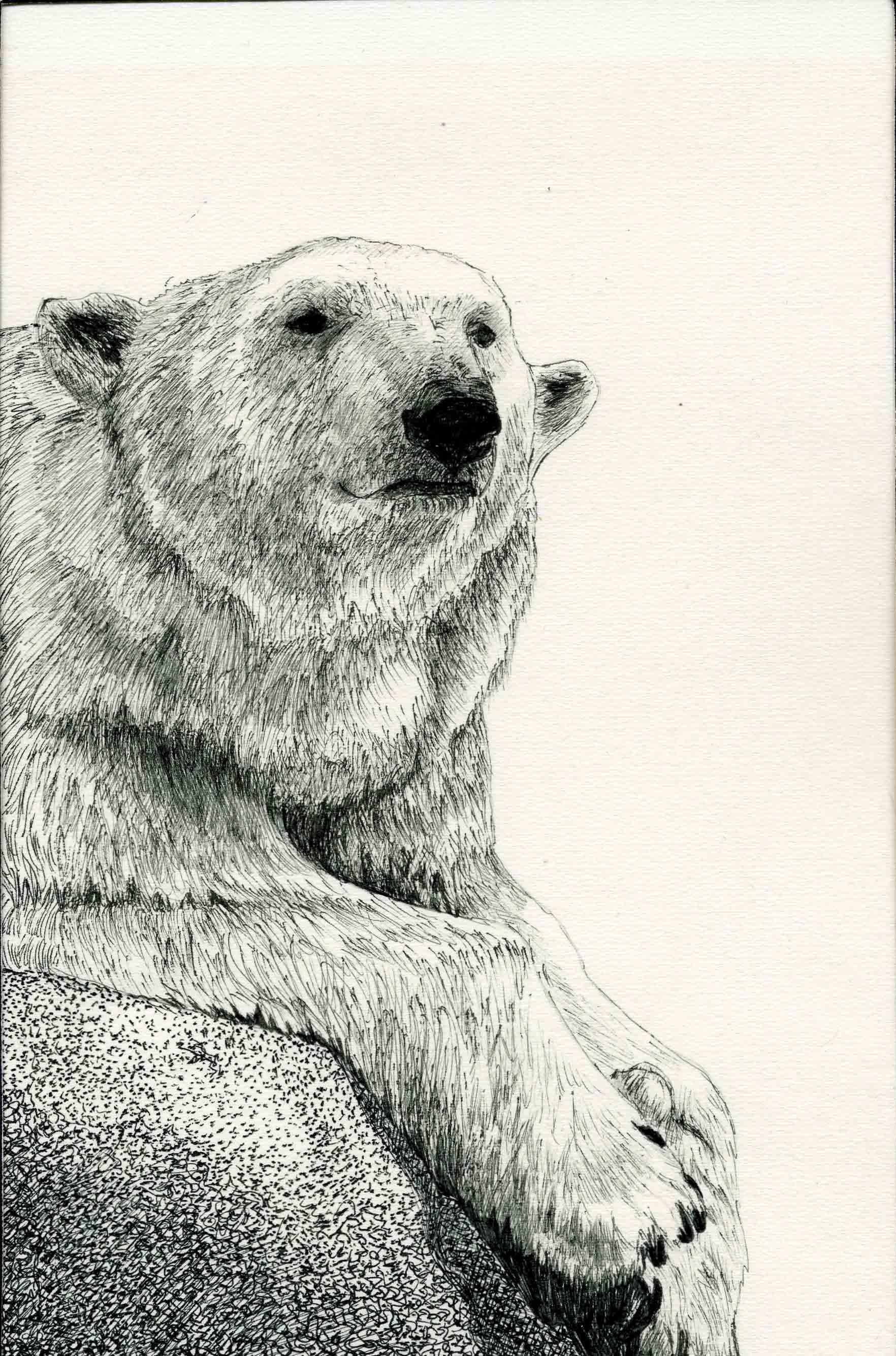 Drawn polar  bear polo #6