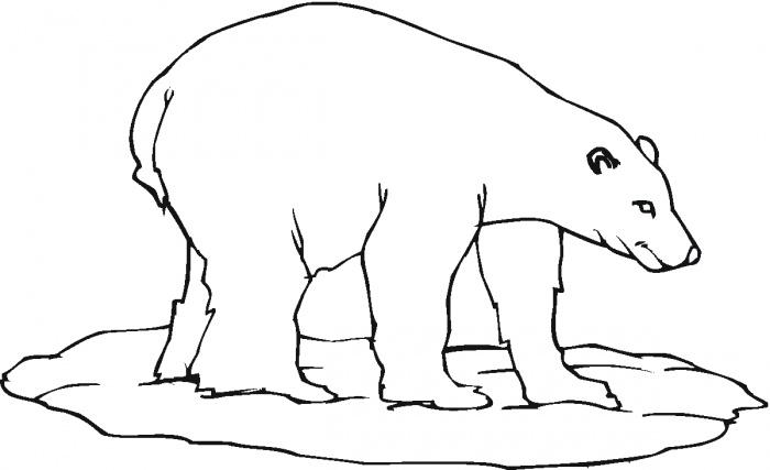 Drawn polar  bear side view Colouring in colouring bear Polar