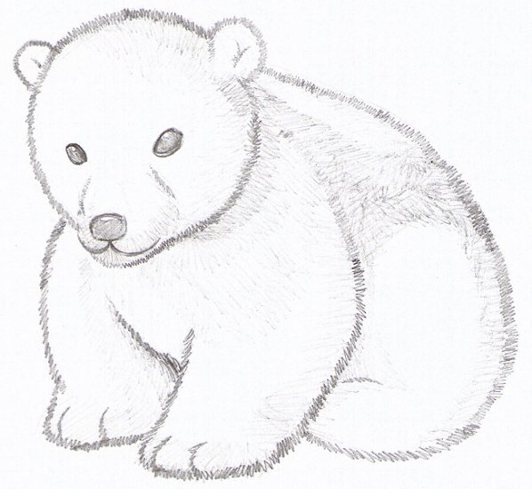 Drawn polar  bear real baby #6