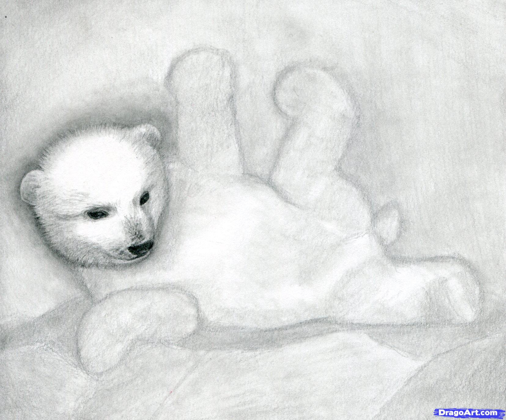 Drawn polar  bear real baby #7