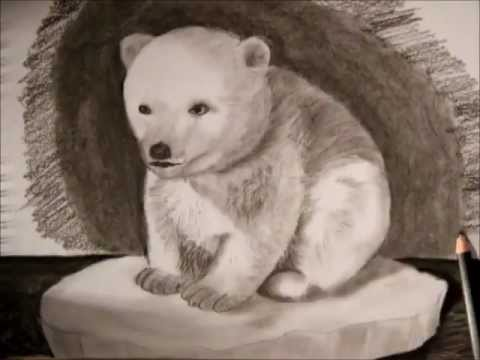 Drawn polar  bear real baby #5