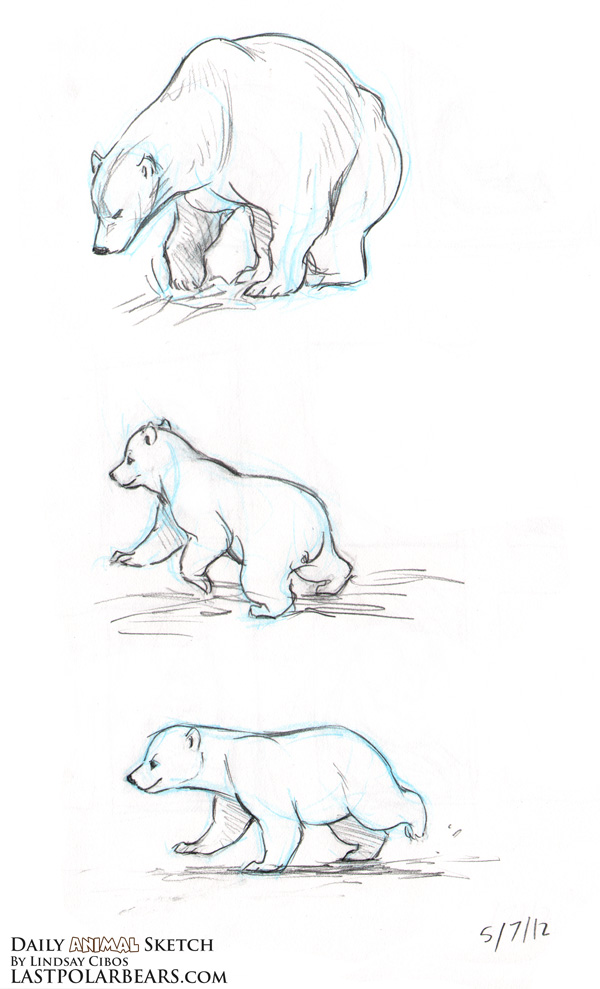 Drawn polar  bear real baby #8