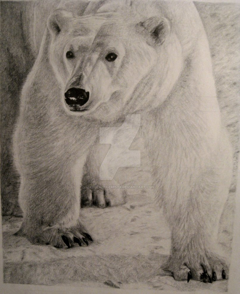 Drawn polar  bear simple XTheAlchemistx Storm Bear in a