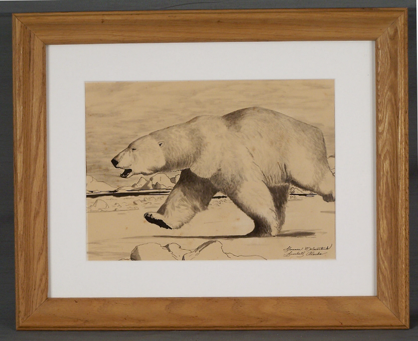 Drawn polar  bear ice drawing (B Nupok drawing Florence x