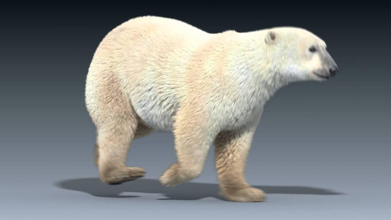 Drawn polar  bear running bear #11