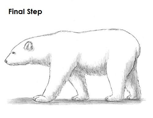 Drawn polar  bear sad #9