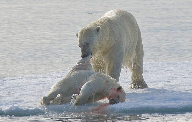 Drawn polar  bear savage #4