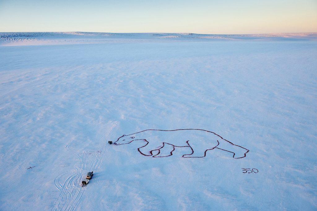 Drawn polar  bear savage #7