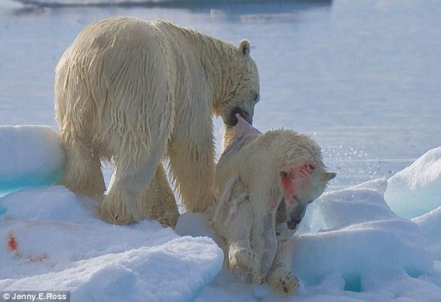 Drawn polar  bear savage #5
