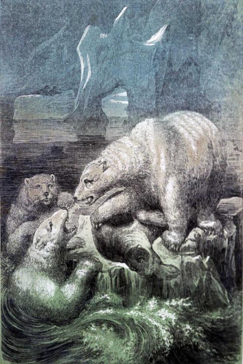 Drawn polar  bear savage #6