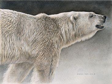Drawn polar  bear savage #2