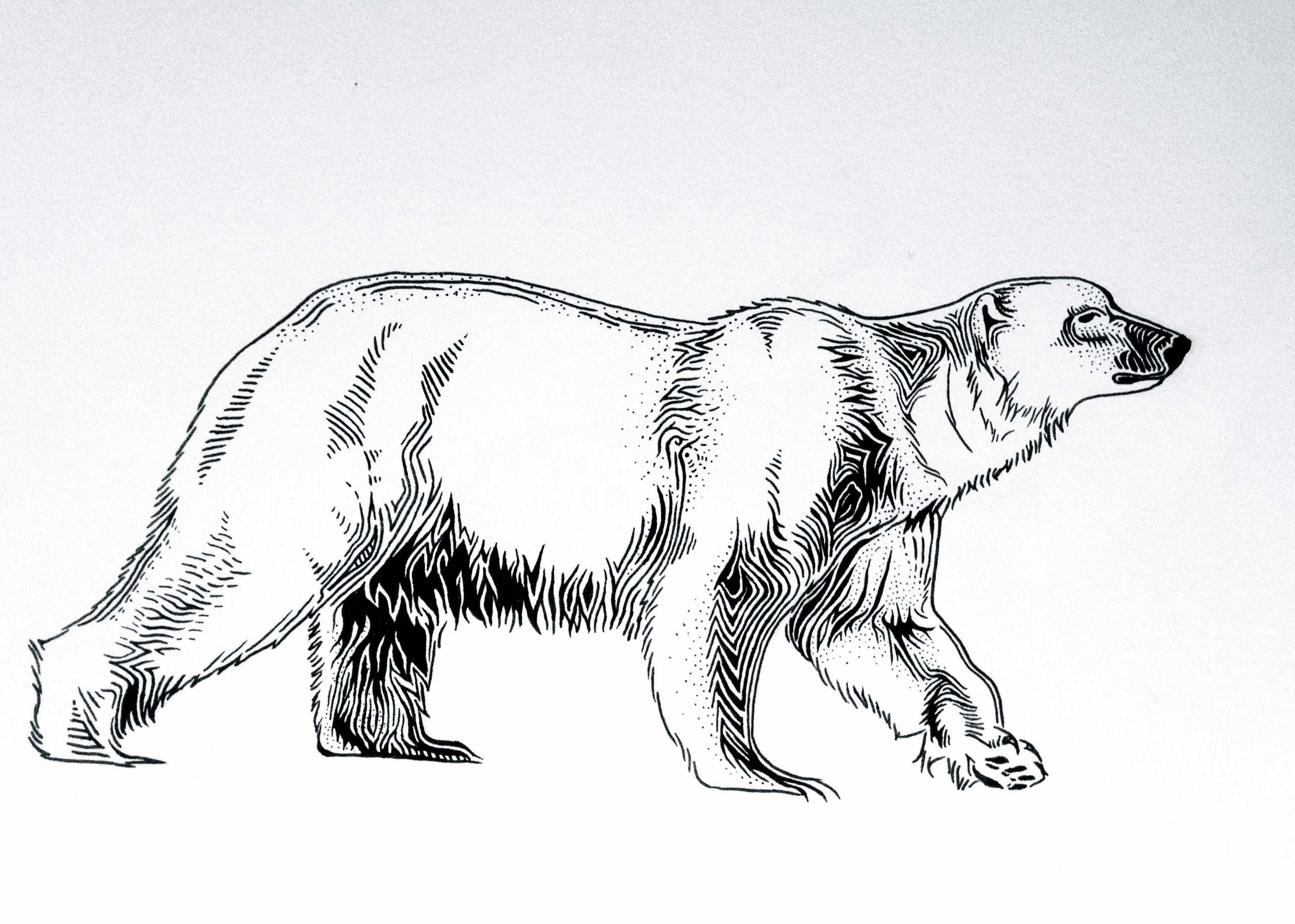 Drawn polar  bear savage #12