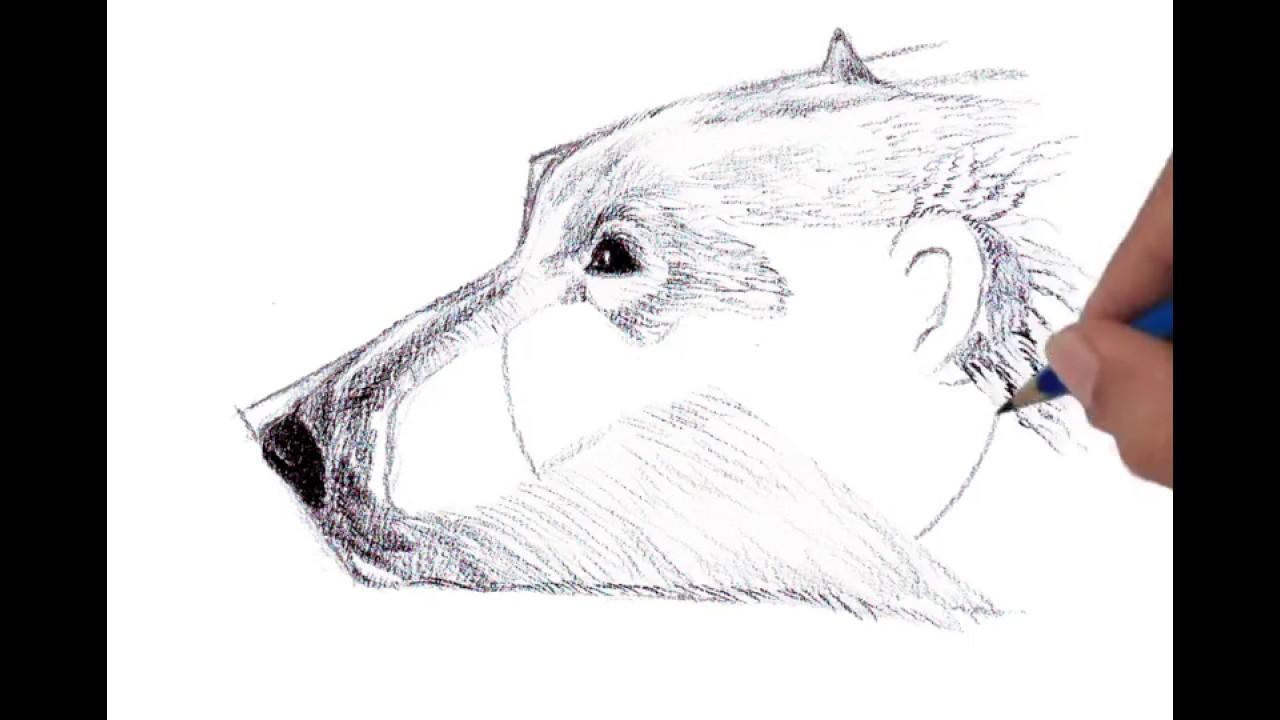 Drawn polar  bear side view Head Head view Bear YouTube