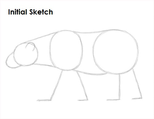 Drawn polar  bear sketch Draw Sketch Polar Bear Bear