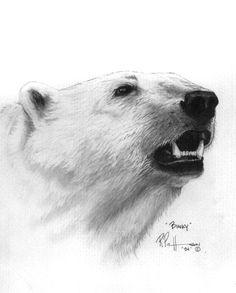 Drawn polar  bear sketch Drawings bears BEAR Sarah Stribbling