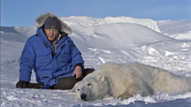 Drawn polar  bear skinny Bear during anaesthetised fakery polar