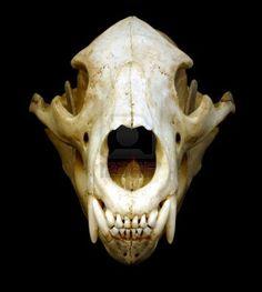 Drawn polar  bear skull Pinimg https://s ak0 Bears cache