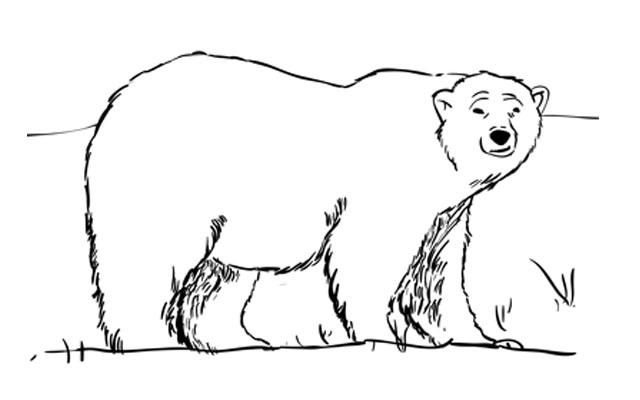 Drawn polar  bear small Step a Draw by Polar