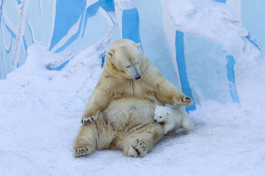 Drawn polar  bear snow bear Accept might Gerda the be