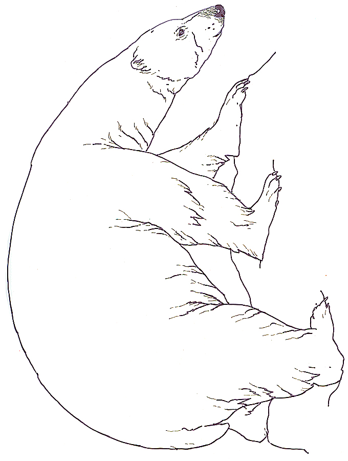 Drawn polar  bear snow bear Polar Three Bears Polar Bear
