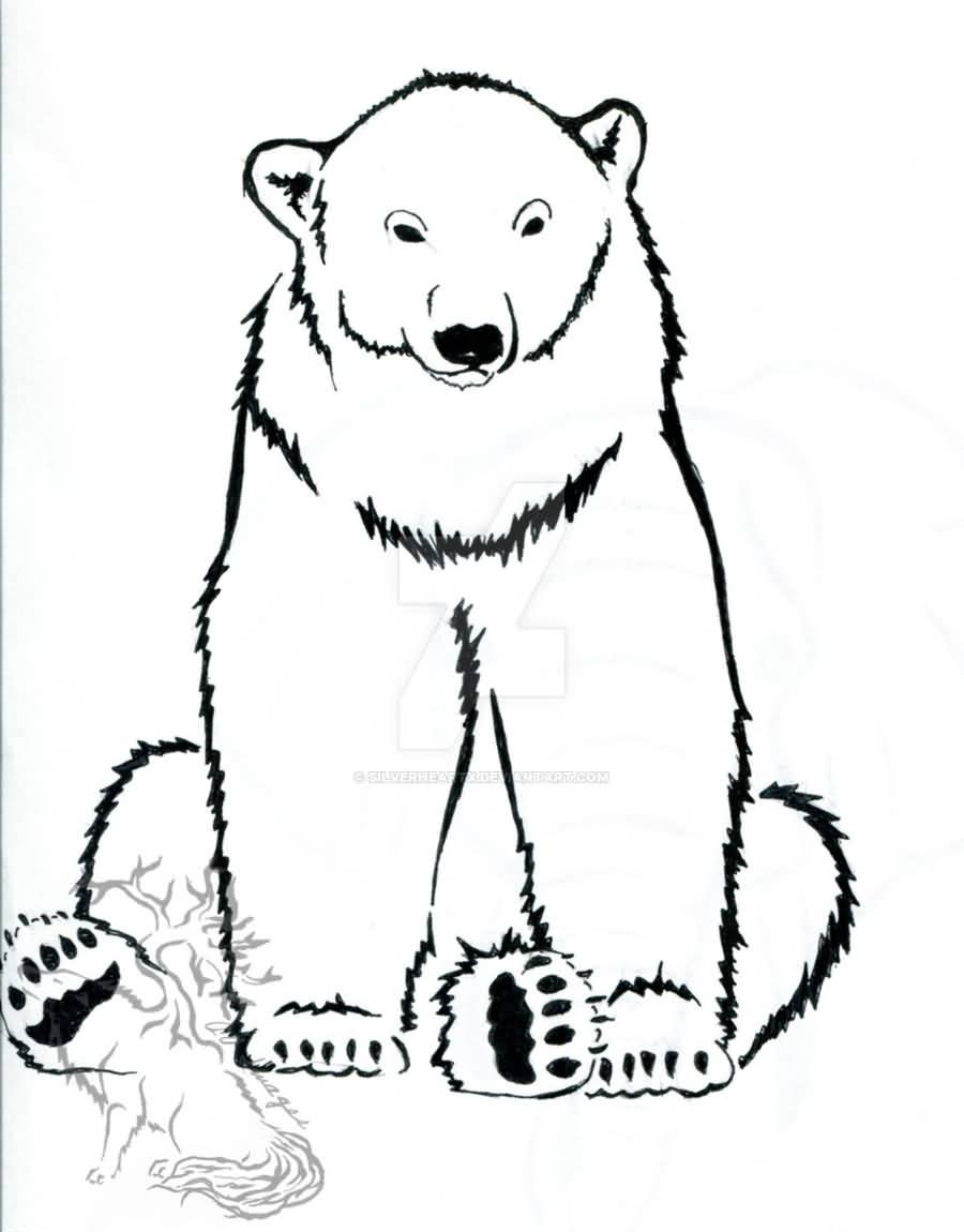 Drawn polar  bear snow bear Polar for Bears drawings