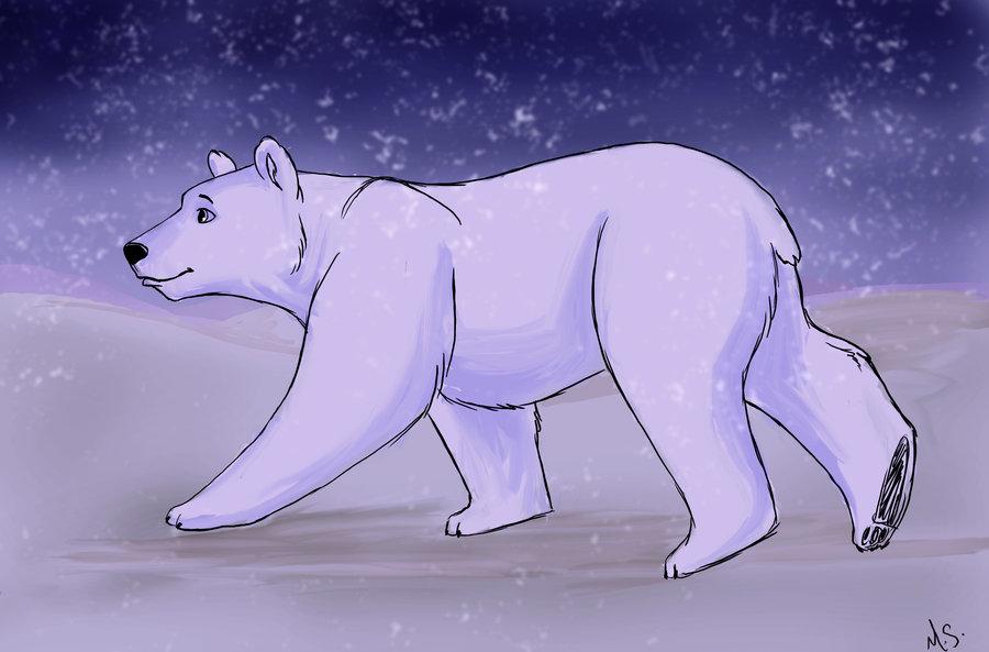 Drawn polar  bear snow bear DeviantArt Melis bear Miss Melis