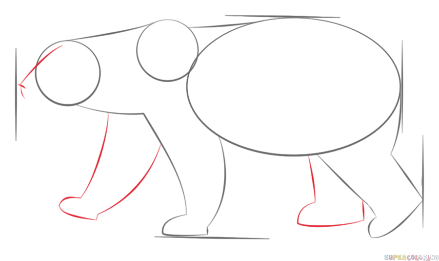 Drawn polar  bear step by step How to draw Step a