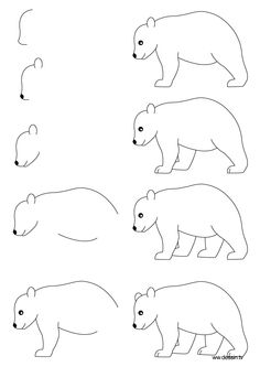 Drawn polar  bear step by step How how draw with simple