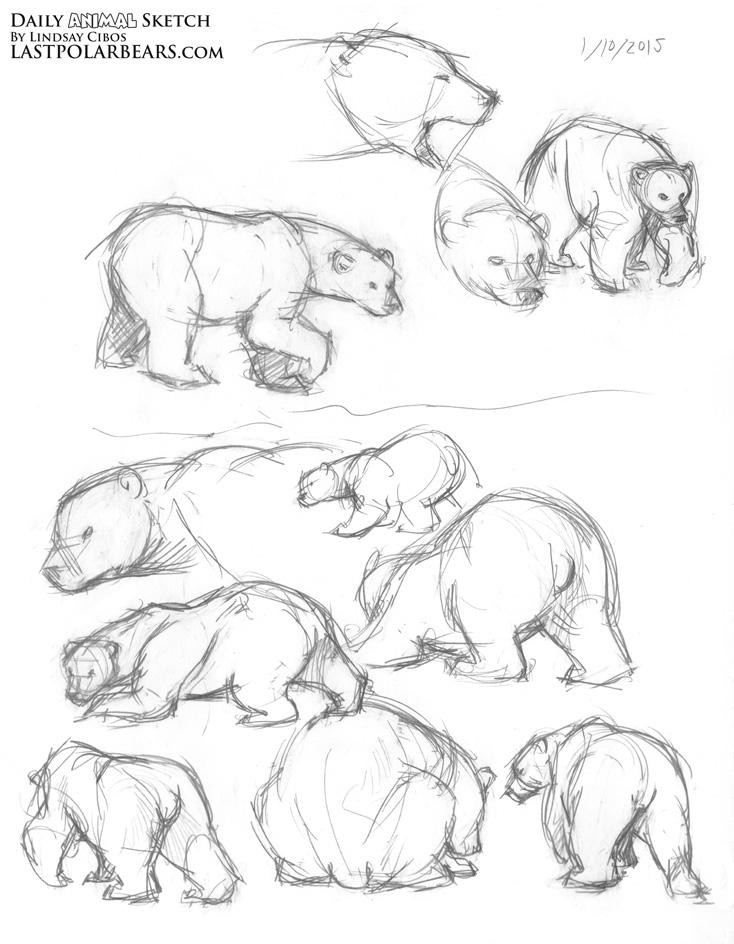 Drawn polar  bear thumbnail Lindsay – Polar Animal Warm