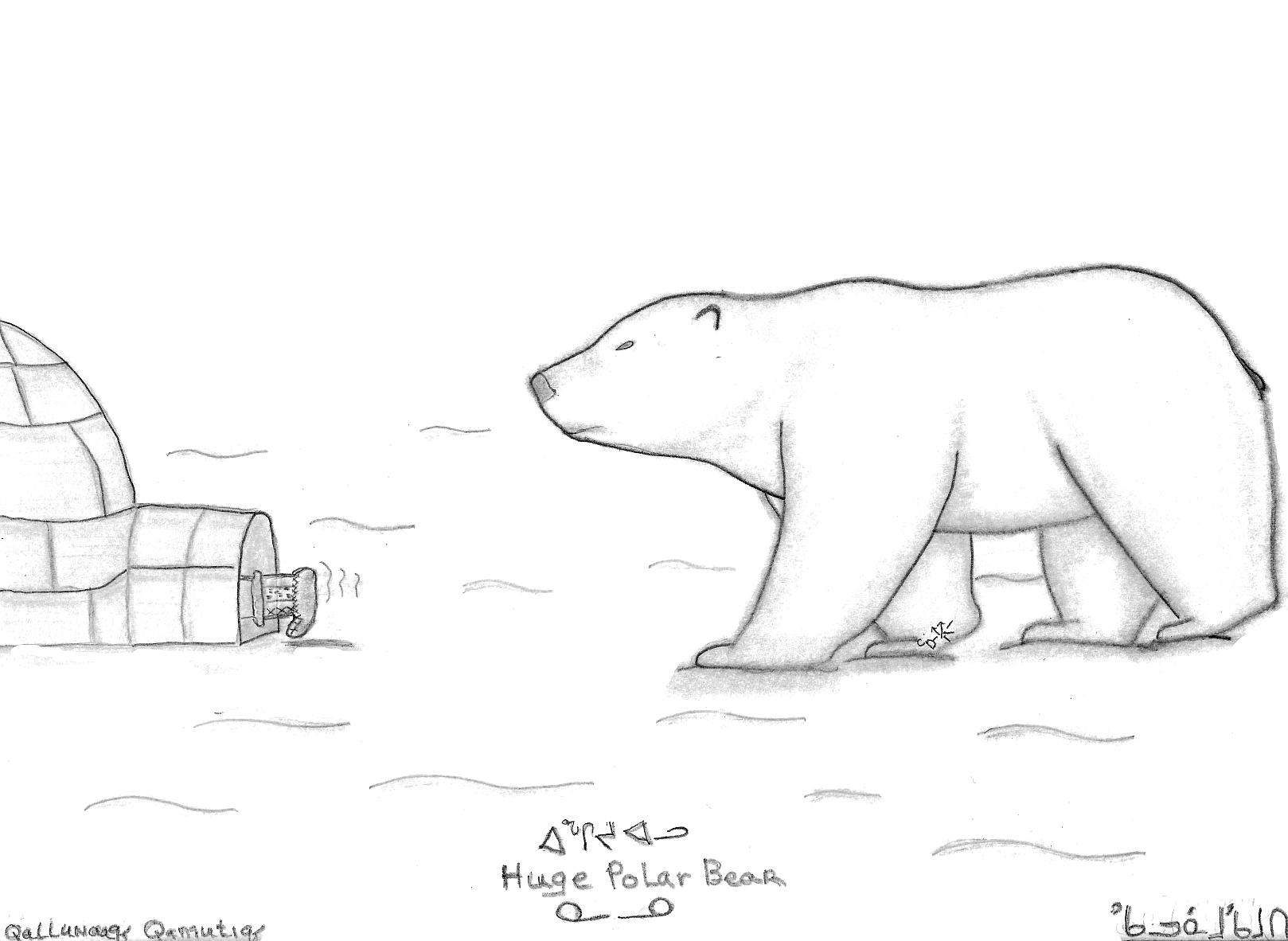 Drawn polar  bear thumbnail Wikimedia jpg File:Huge Polar Bear