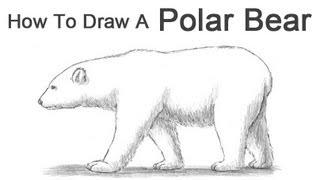 Drawn polar  bear thumbnail To Draw a How Bear