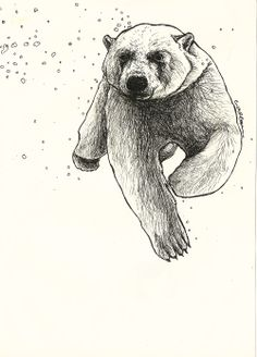 Drawn polar  bear tiny Bear Polar Paper Bear Sketch