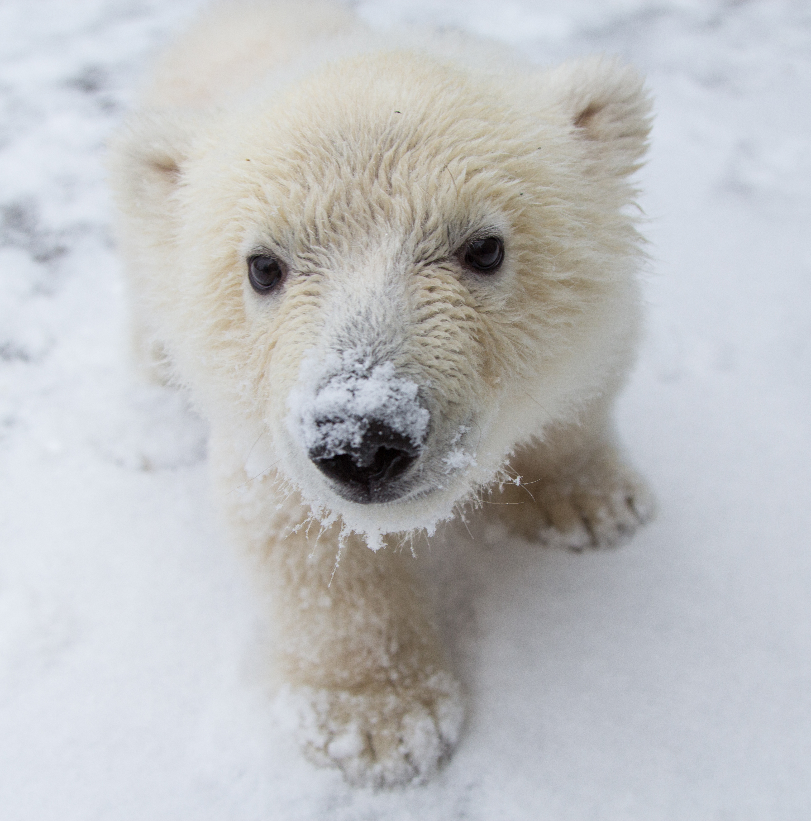 Drawn polar  bear tiny On Rescue Earth: Transcript Baby