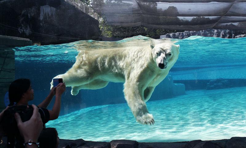 Drawn polar  bear tundra animal #14