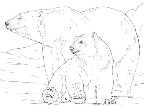 Drawn polar  bear tundra animal #5