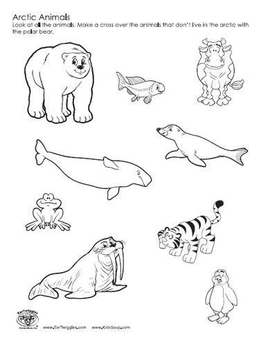 Drawn polar  bear tundra animal #7
