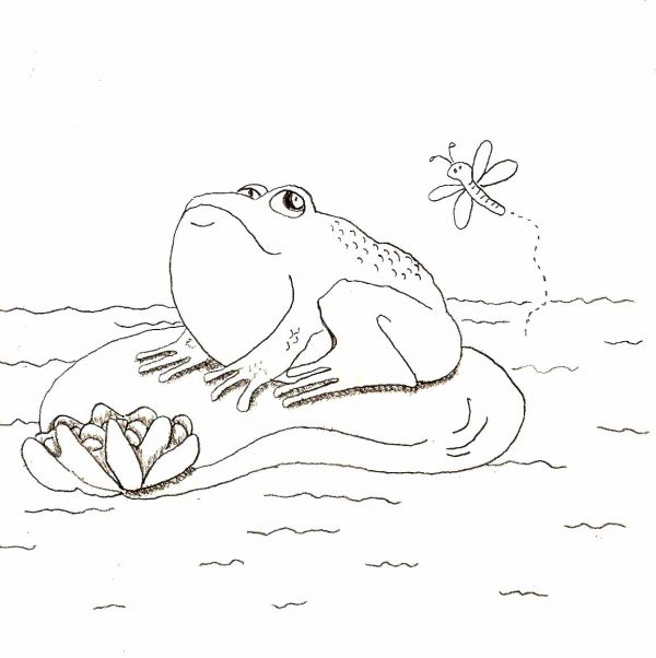 Drawn pond Lily dinner Simple Draw in
